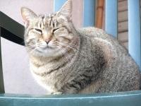 陽だまり猫